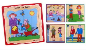 Layer Human Life Cycle Puzzle
